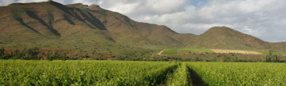 Award winning wines from South Africa!